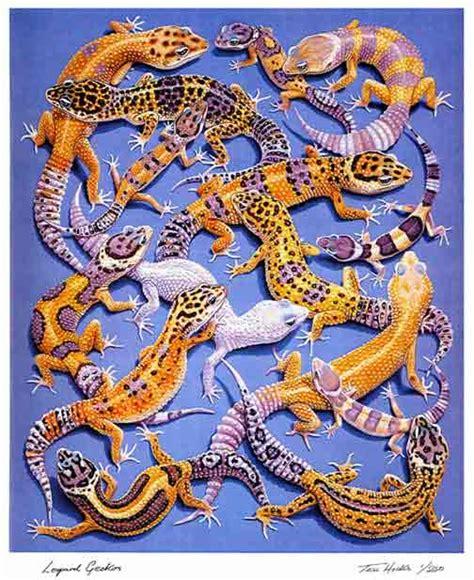 Alas Kandang Tokek leislie s pet tips memilih leopard gecko