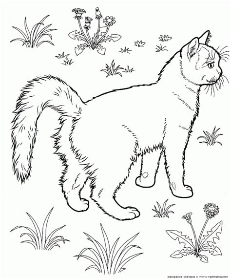 coloring pages of tabby cats black cat coloring page coloring home