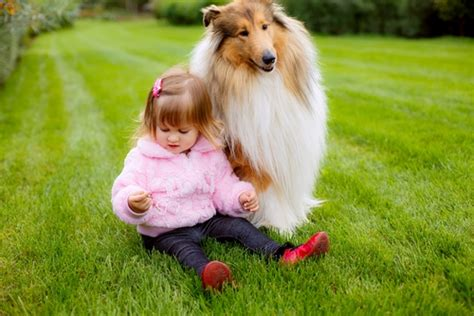 kid friendly dogs themommyguide top 10 dogs for