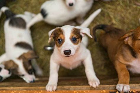 what do you do when your puppy cries at understanding why your puppy cries and what you can do to stop it the dogington post