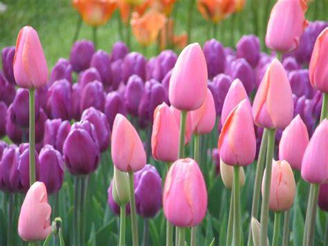 gambar bunga terindah  unik koleksi gambar hd