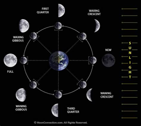 lunar phases diagram day 6 tides and the seasons david bird providence high