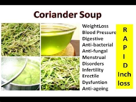 Coriander Detox Drink by Coriander Leaves Juice For Weight Loss Highpeak