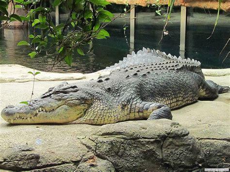vorhänge 4 meter lang andra djur i djurparker generated by visuallightbox