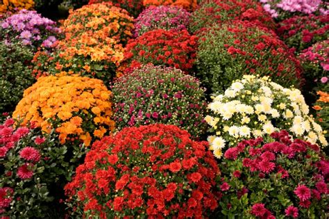 Planting Flowers For Fall And Winter Fall Flower Garden