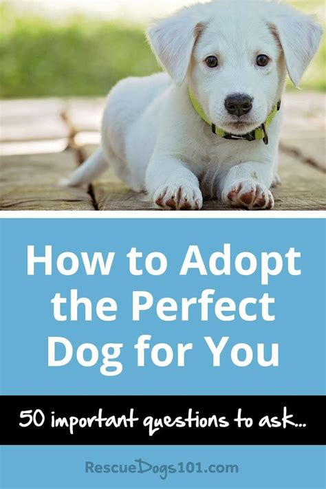 how to adopt a puppy 25 best ideas about adopt a on