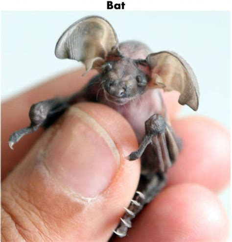 Tiny by Funny Cool Pictures Tiny Cute Animals