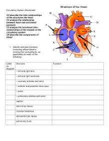pictures heart diagram worksheet getadating
