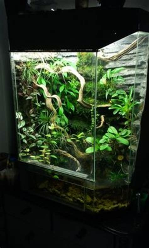 1000 images about corn snake biotope on corn