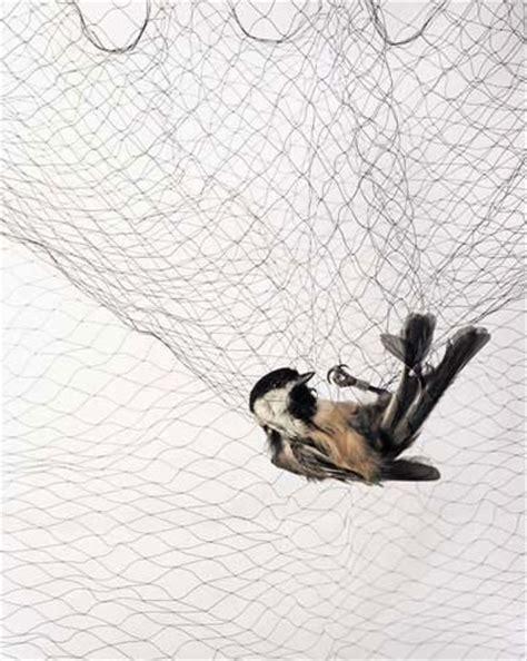 Bird Net mist bird net for catching bird from shijiazhuang yimen