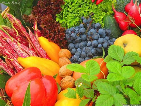 Vegetable L by About Nutrition Of Vegetables Small Businesses I E