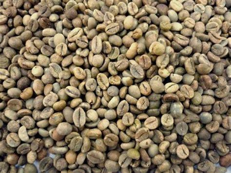 Robusta Coffee robusta coffee bean