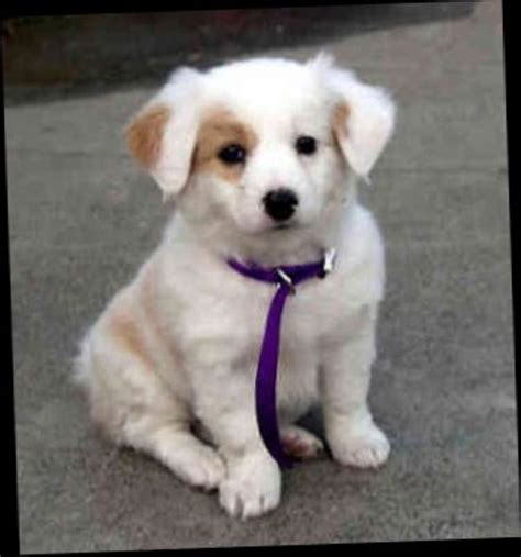 best small breed dogs best small breed dogs for n4wa9lxm jpg 600 215 643 puppy breeds