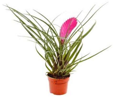 unusual houseplants unusual house plants strike up conversation with some