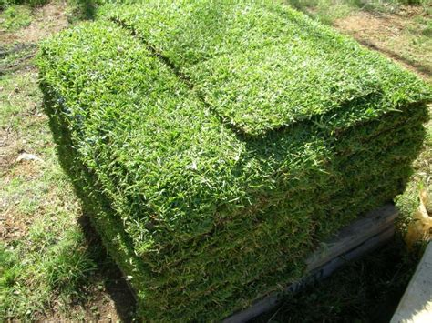 green couch grass turf coopers plains