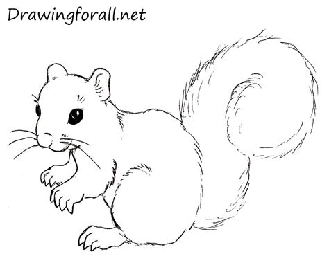 how to a squirrel how to draw a squirrel drawingforall net