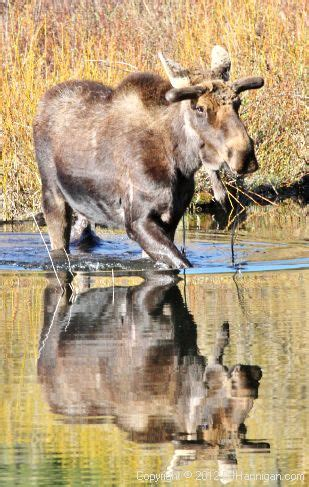 Moose Records Birth Records Birth Certificates Park County Co