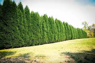 How Much To Put Up A Fence In Backyard Blog 187 Rutgers Landscape Amp Nursery Just Another