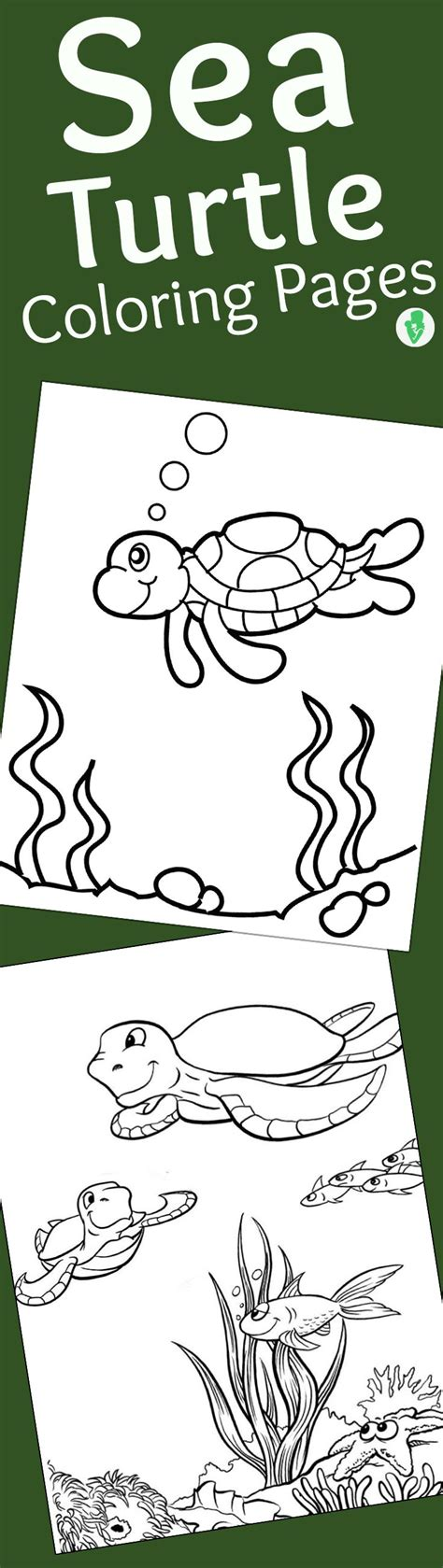 turtle love coloring pages 16 best turtle unit study images on pinterest turtles