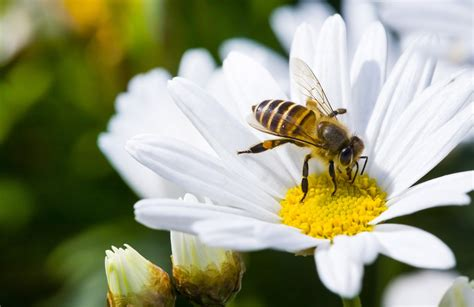 Como as abelhas encontram o Mel? Estratégias & Instintos