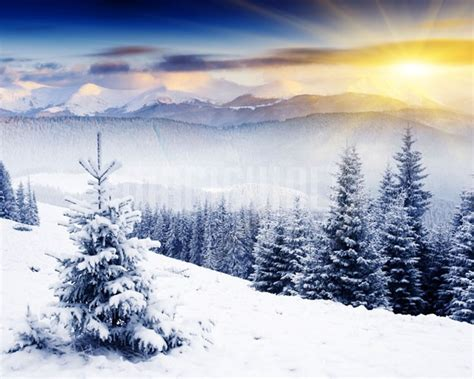 My Sticker Panorama Animal beautiful winter panorama with snow covered trees wall