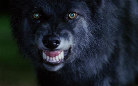 13 must see werewolf movies werewolf movies www pixshark com images galleries with