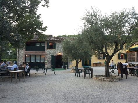 giardini con ulivi giardino con ulivi photo de le fornaci este tripadvisor