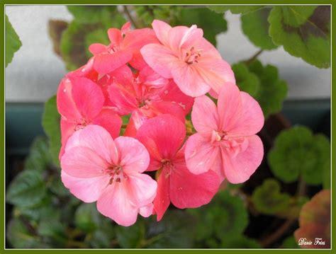 Comment Aménager Balcon by Scenery Pictures Fleurs De Printemps Balcon