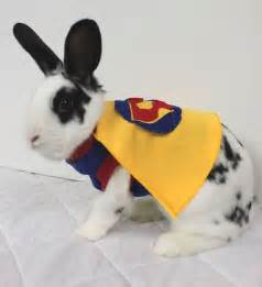 halloween costumes for bunnies 24 animals that aren t dogs in costumes neatorama