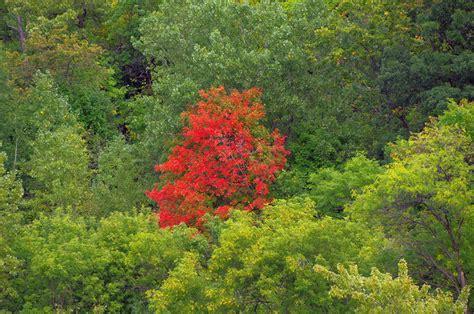 mn dnr fall colors minnesota fall color guide dnr predicts unusually