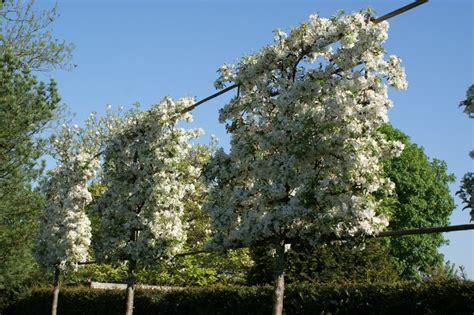 sichtschutz pflanzen garten 686 baum f 252 r terrasse terrasse und balkon mit pflanzen und