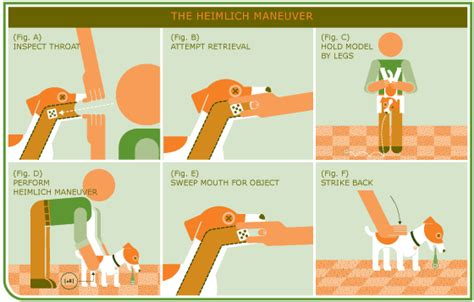 heimlich for dogs aid for dogs heimlich manoeuvre and cardiopulmonary