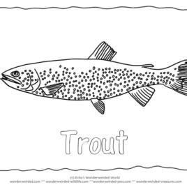 coloring pages of tiger fish tiger fish coloring page kids drawing and coloring pages