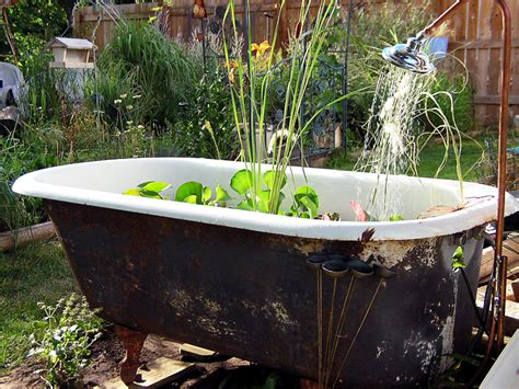 bathtub garden make a splash with container water gardening pond trade
