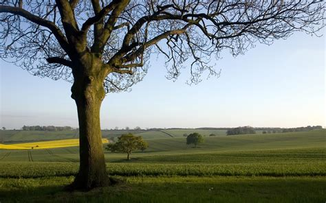 Landscape Pictures Of Trees Landscape Wallpaper Of An Oak Tree In The Countryside