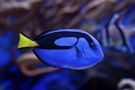 Blue Animals 28 amazing blue colored animals with insanely beautiful