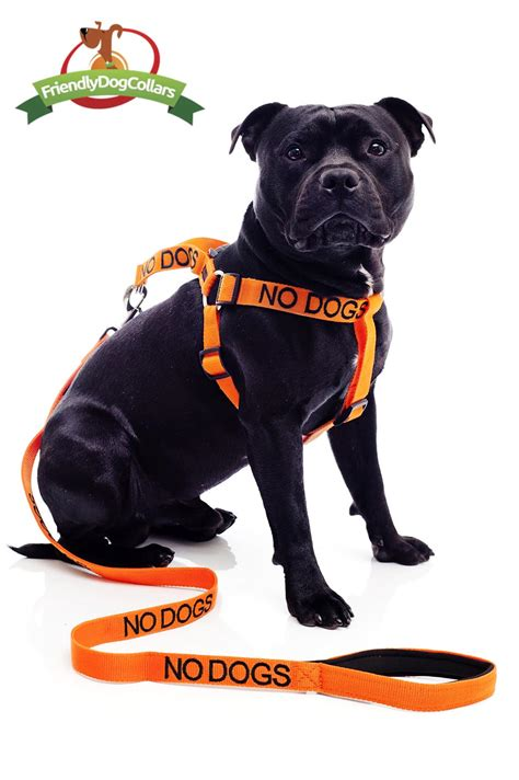puppy harness and leash no dogs lead and harness friendly collars