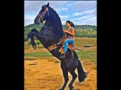 mujer abotonada por un caballo mujer abotonada con caballo mujeres a caballo caballos