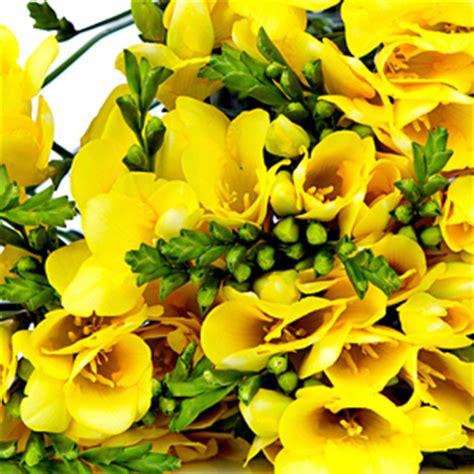fresie fiori significato dei fiori fai da te in giardino