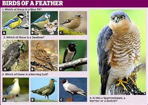 are you a bird brain or a nature nut find out with our