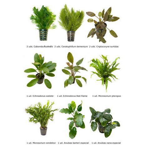 imagenes de flores naturales con sus nombres plantas naturales para acuarios combo 9 tiendanimal
