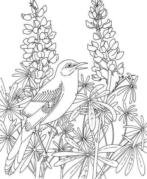 coloring pages of birds and flowers free printable coloring page texas state bird northern