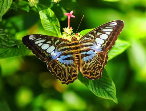 imagenes mariposas naturaleza de mariposas imagenes de mariposas en la naturaleza