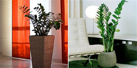 6sqft 10 best plants for apartment dwellers