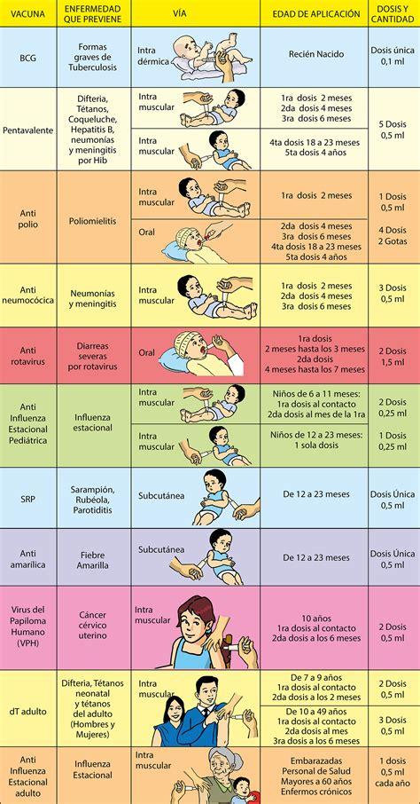 cuadro de vacunas esquema de vacunaci 243 n conoce las vacunas y cu 225 ndo aplicarlas