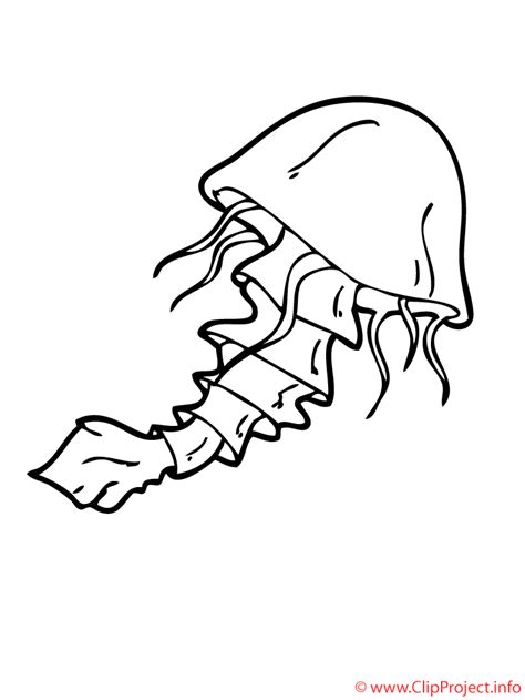 imagenes blanco y negro de halloween medusa dibujo para colorear gratis