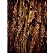 Top Backgrounds Of Tree Bark Colelction ID QWI96QWI
