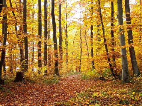 Forest L by Photo Gratuite Forest L Automne Arbres Nature Image