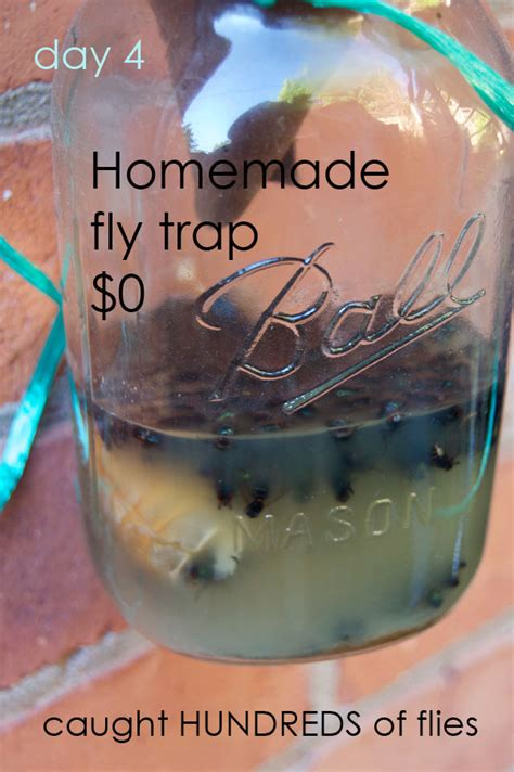 How To Catch Flies In House by The Best Flytrap And It Probably Isn T The One You See All The