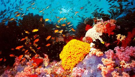 the the great barrier reef of australia its products and potentialities containing an account with copious coloured and photographic illustrations and coral reefs pearl and pearl shell bãªch books visit the great barrier reef in australia eggwhite